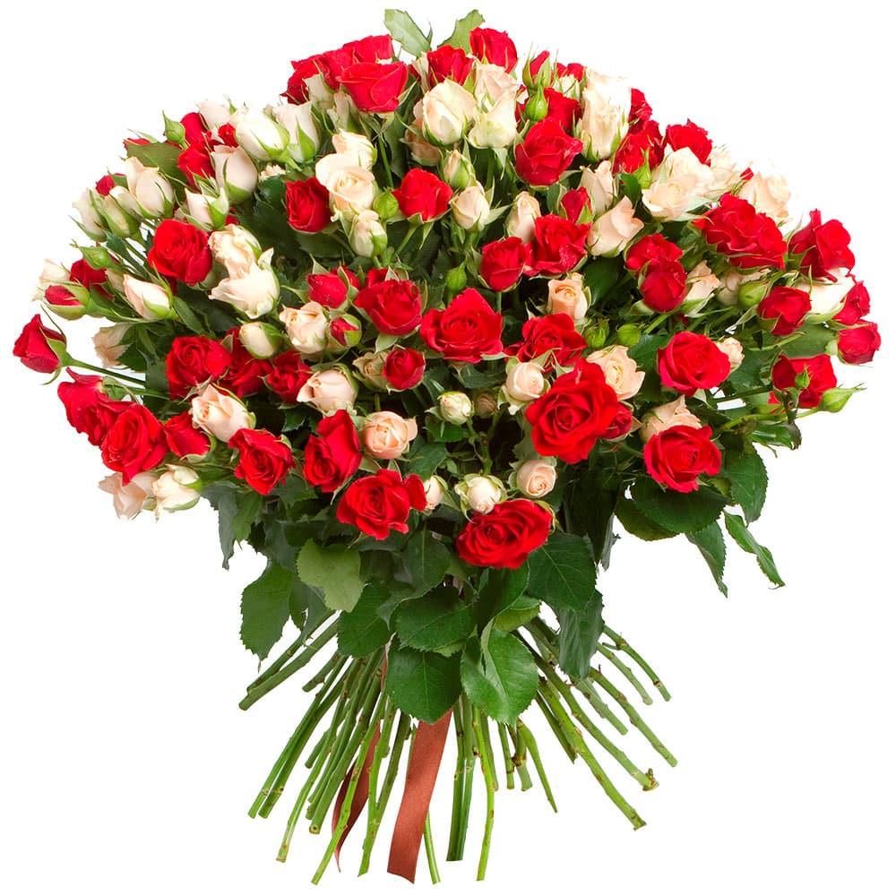 Красивые цветы фото для поздравления, открытки осени